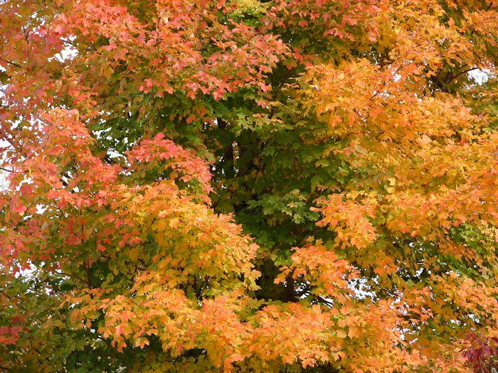 Fall Folage